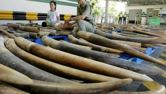 Hongkong ist laut Naturschützern ein wichtiger Umschlagplatz bei illegalen Geschäften mit Wildtieren und tierischen Produkten. Ein Fünftel des weltweit beschlagnahmten Elfenbeins wurde in den letzten zehn Jahren in Hongkong entdeckt. (Archivbild)