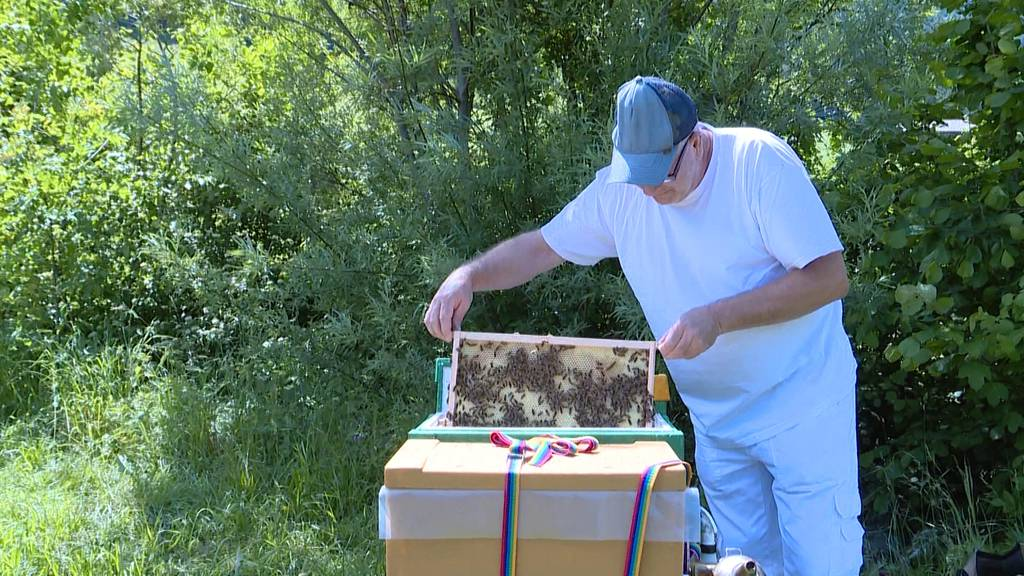 120 Kilo Honig weg: Diebe räumen Bienenstöcke leer
