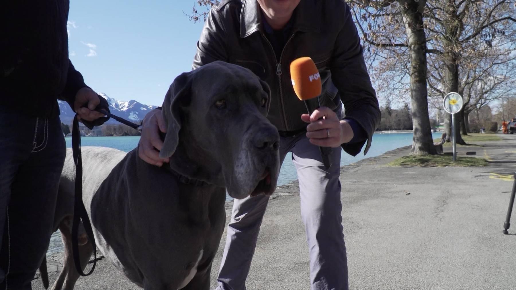 Illaya — der wohl bekannteste Hund im Berner Oberland