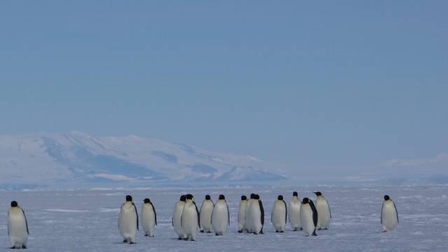 Pinguine in der Antarktis (Archiv)