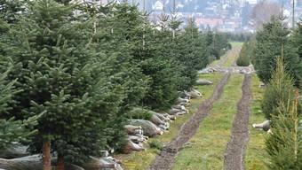 Ob der Vater bei all den geraden Tannen einen passenden Weihnachtsbaum gefunden hätte?