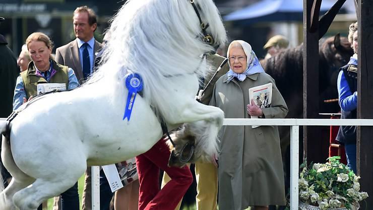 Pferdeliebhaberin Königin Elizabeth während einer Vorführung der Windsor Pferdeschau vor zwei Tagen