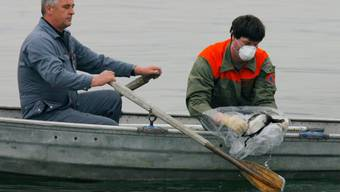 Seit dem Auftreten der Vogelgrippe am Bodensee sind in Deutschland, Österreich und der Schweiz bis zu 80 tote Vögel gefunden worden (Archivbild).