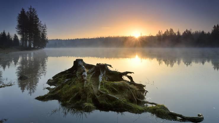 Die vielen kleinen Teiche im Oberharz sind oft von Moorlandschaften umgeben, die bei Nebel besonders mystisch wirken.