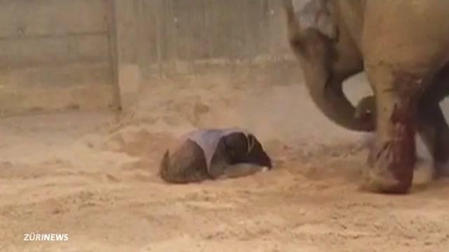 Helle Freude und etwas Sorge um neues Elefantenbaby