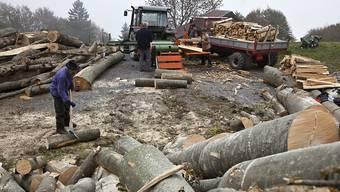 Bergbauern schlagen und rüsten Laubholz. Während die Waldwirtschaft in der Schweiz mit Preiseinbrüchen nach der Euro-Frankenmindestkursaufhebung kämpft, ist die Nachfrage in China nach Schweizer Laubholz gross. (Archiv)