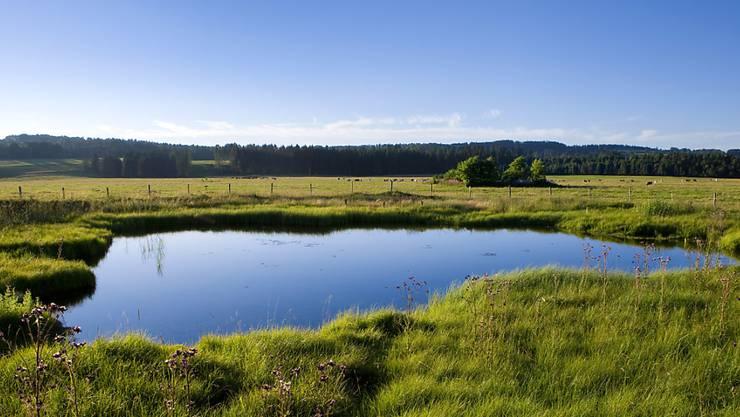 Teiche wie dieser bei Les Breuleux JU sind seltener geworden. Die geringe Dichte solcher Kleingewässer und die zu schmalen Schutzzonen um sie herum sind ein Problem.