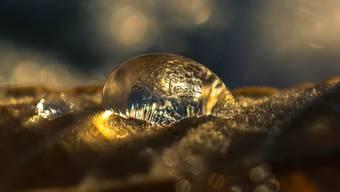 Golden glänzt dieser gefrorene Tropfen auf einem Herbstblatt.