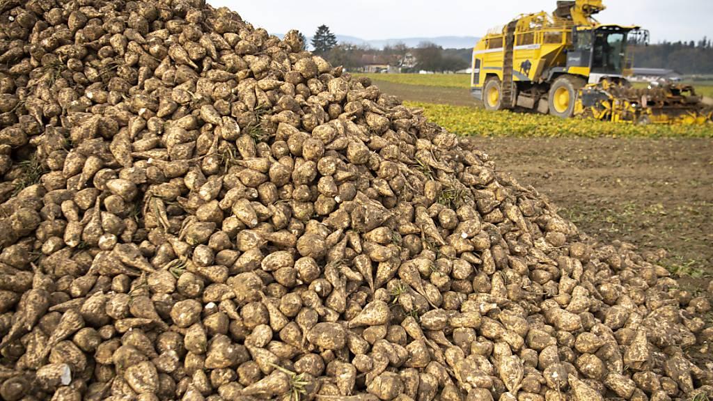Die einheimische Zuckerproduktion soll einen gesetzlich verankerten Grenzschutz erhalten. Das hat das Parlament beschlossen. (Archivbild)