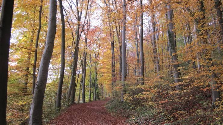 Hier hat man einserseits die Bäume in ihrer Farbenpracht, anderseits auch den Weg mi dem Laub, das farbig rötlich ist.