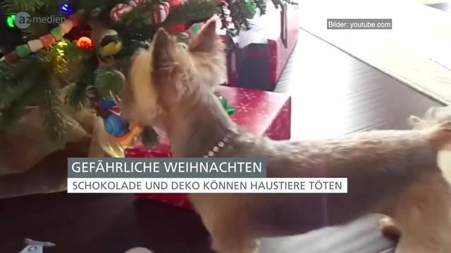 Gefährliche Weihnachten für Hund und Katze