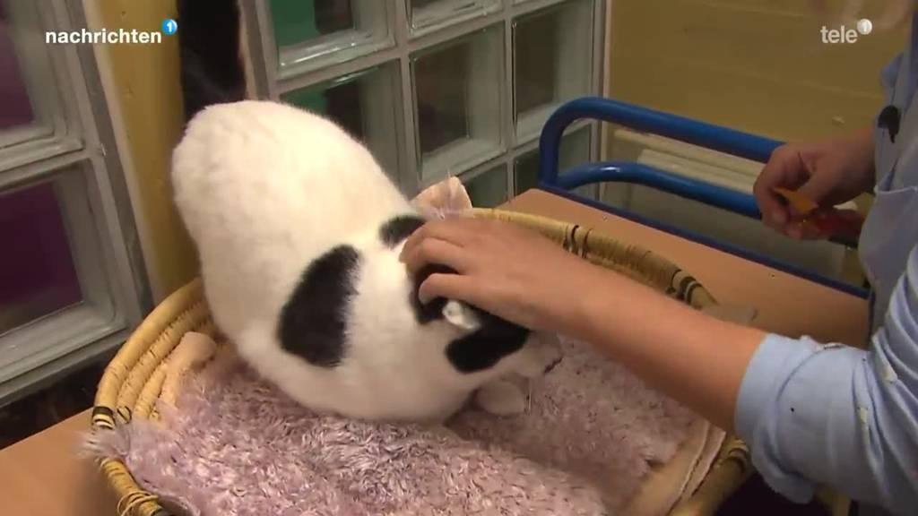 Stadt Luzern will Wildtiere vor Katzen schützen
