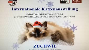 Katzenausstellung in Zuchwil abgesagt