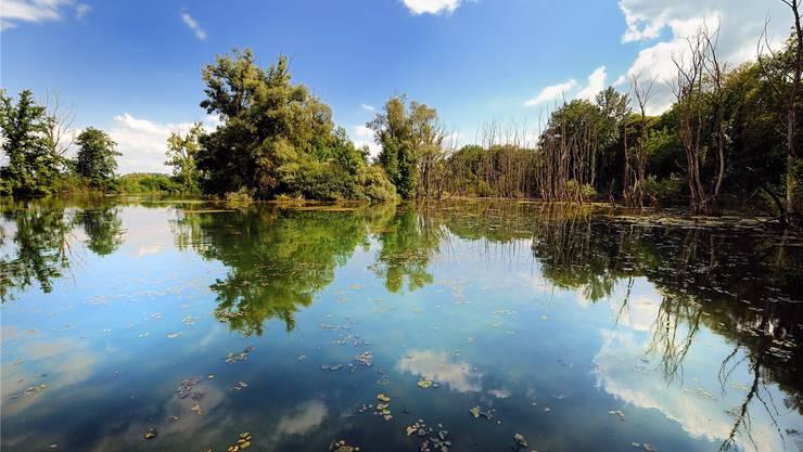 Idyll und Balsam für die Städterseele: Das Naturschutzgebiet Petite Camargue Alsacienne ist schnell von Basel aus zu erreichen. Fotos: Jacques Witt