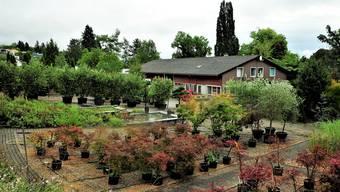 Das Areal der Hauenstein Baumschulen AG wird künftig als Bauland genutzt. Bis zu 500 Personen werden hier künftig leben.