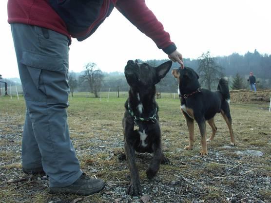In der Hundeschule wird generell Disziplin und Gehorsam gelernt.