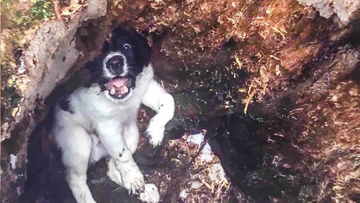 Der Hundewelpe Diego wurde vom Jagdaufseher in einem Baumstrunk gefunden, bei Aussentemperaturen um 0 Grad.