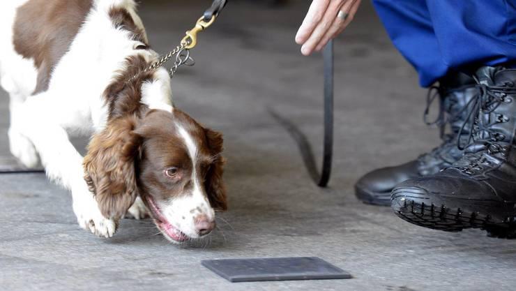 Drogenspuerhund «Junior» während einer Demonstration in Winterthur