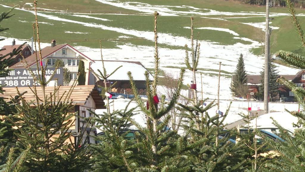 Guter Zweck: Appenzeller Freunde verkaufen Weihnachtsbäume