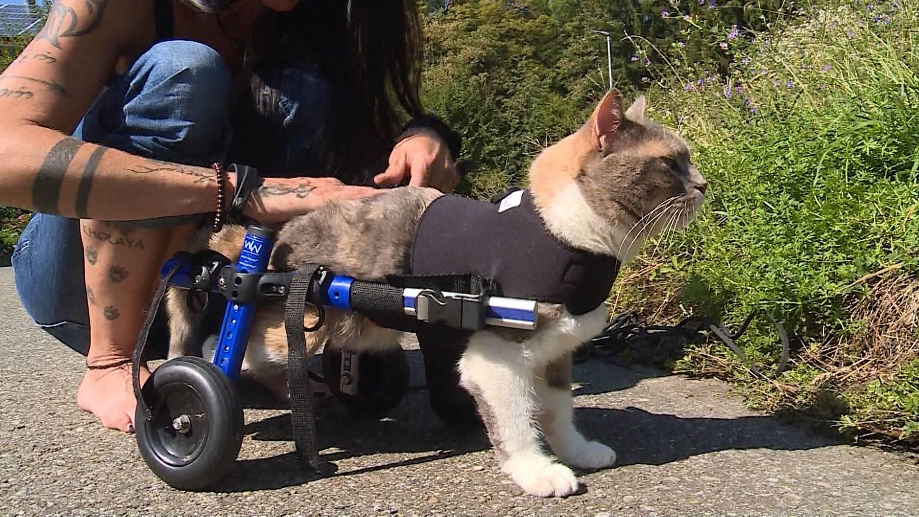 Handicapierte Katzen