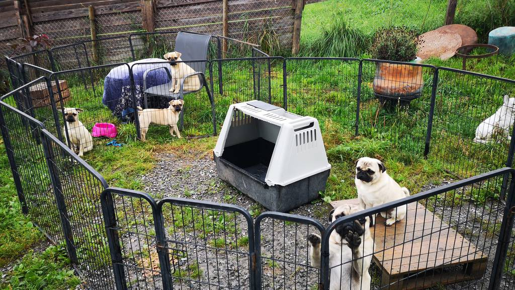 Die Hunde wurden nicht fachgerecht gehalten.