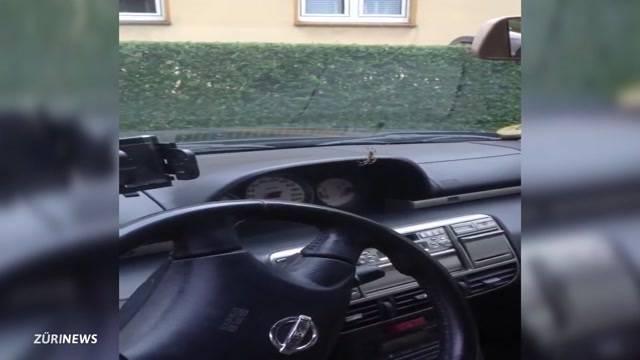 Autounfall wegen Spinne