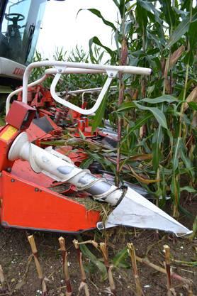 Das Maisgebiss des Häckslers kann acht Reihen auf einmal ernten
