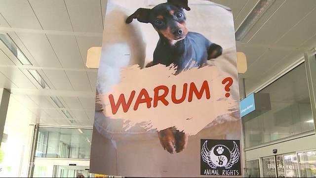 Hunde ertränkt: Paar vor Gericht