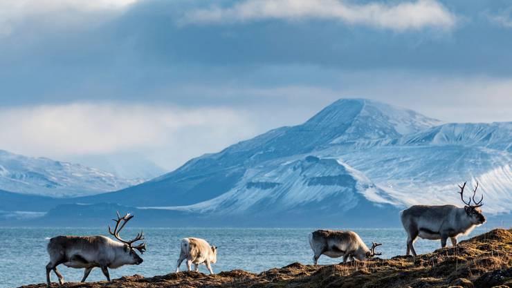 Die neue Wahlheimat des Bergdietiker Geschwisterpaars, Spitzbergen, besticht durch schöne Landschaften und faszinierenden Tierwelten.
