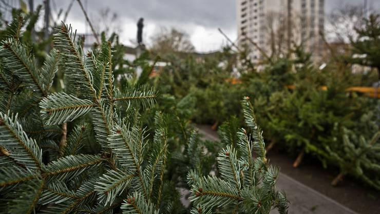 Auch in Oberengstringen werden dieses Jahr wieder Weihnachtsbäume verkauft wie hier in Wettingen.