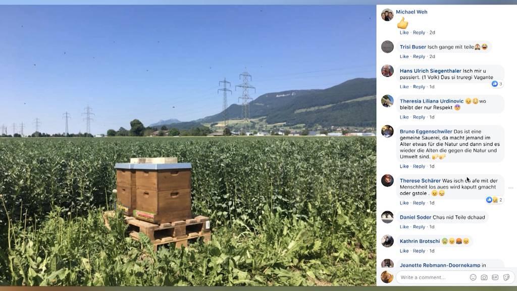 Bienen aus Niederbipp wurden gefunden