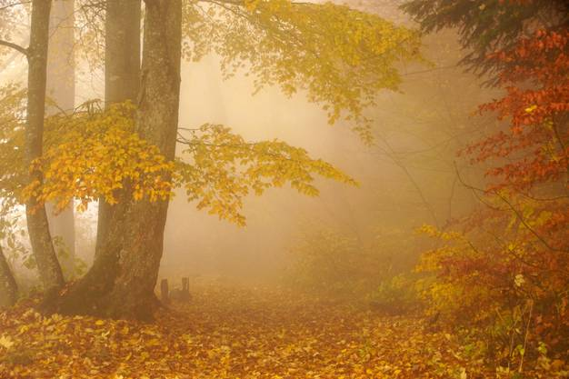 Wie reizvoll herbstliche Nebelwälder sein können beweist uns dieses Leserfoto.