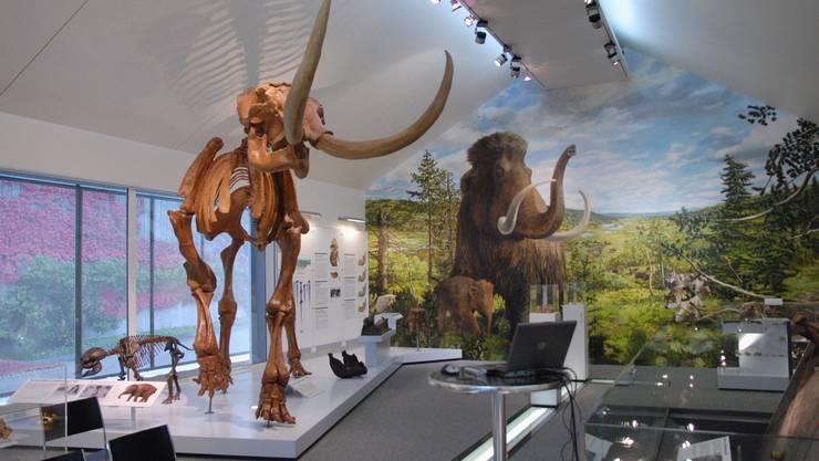 Skelette der Mammuts.