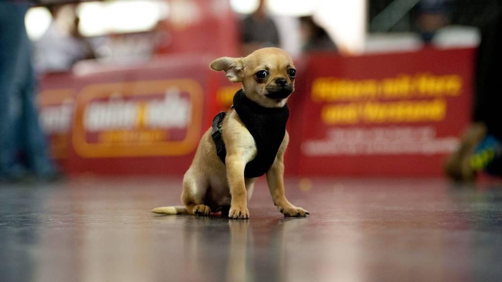 Kleinhunde auch gefährlich