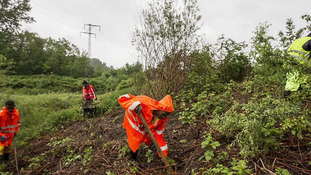 Asylsuchende arbeiten in einem Pilotprojekt in Aarau, unter ihnen auch Kebrameskel aus Eritrea (Mitte). (Archiv)
