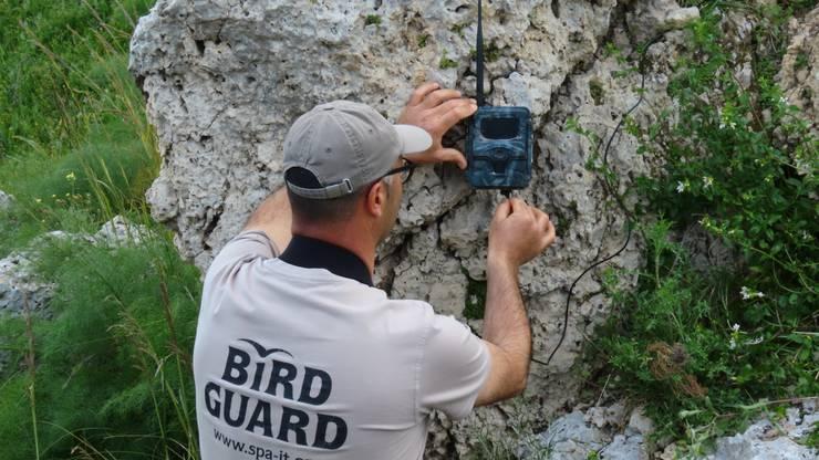 Vogelschützer installiert eine Überwachungskamer.