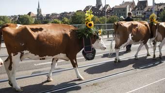 Kühe auf der Berner Kornhausbrücke: Der Alpabzug ist jeweils der Höhepunkt der Sichlete in der Bundesstadt.