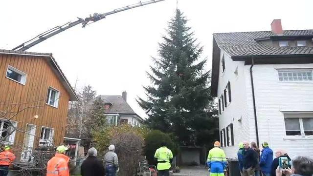 So geht der Holzfluh-Verein Balsthal für den diesjährigen Weihnachtsbaum ans Werk