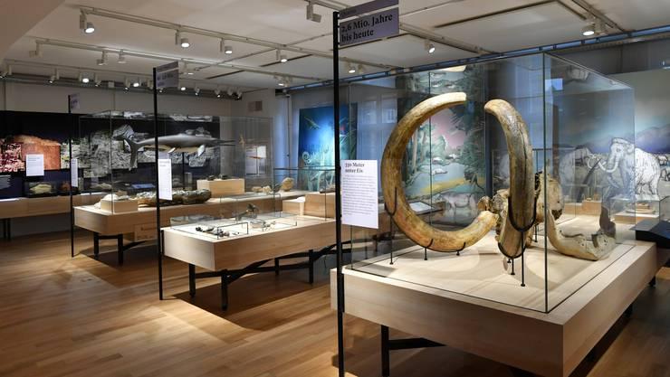 Ein neuer Besuchermagnet: das Oltner Haus der Museen.