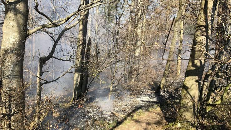 Zum Brand kam es oberhalb des Schlosses Alt-Falkenstein.