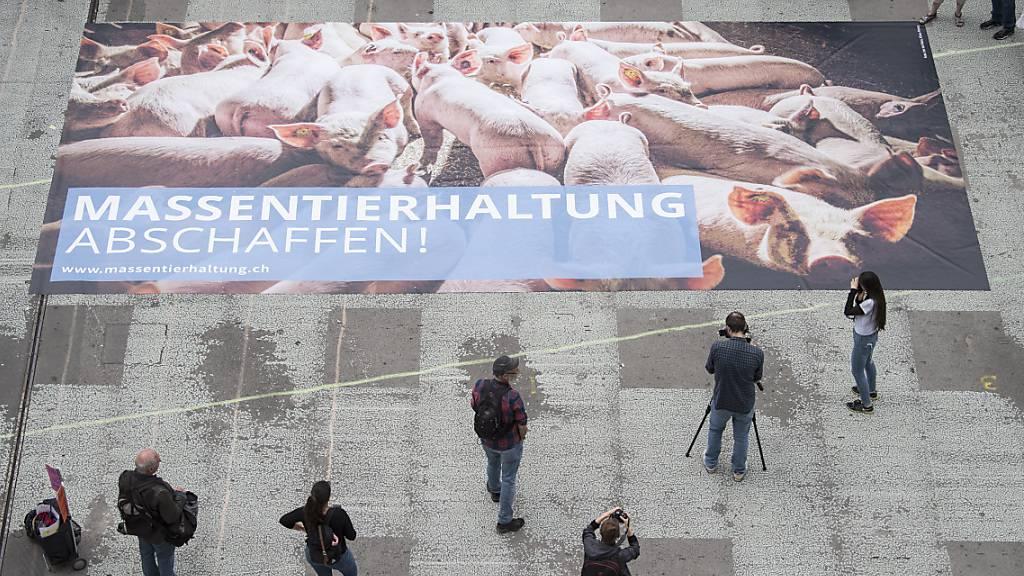 Bundesrat will strengere Verfassungsbestimmungen für Tierhalter