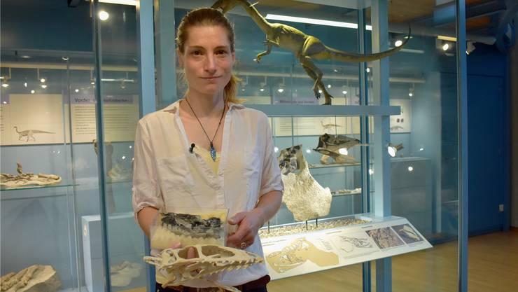 Paläontologin Marion Zahner hat anhand der gefundenen Knochen eine Reproduktion des Schädels hergestellt. Bild: Nadine Böni