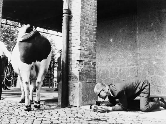Ein Pressefotograf 1963 an der Arbeit. Verrenken müssen sich Fotografen heute noch, der digitale Bilderkreislauf ist aber einfacher geworden.