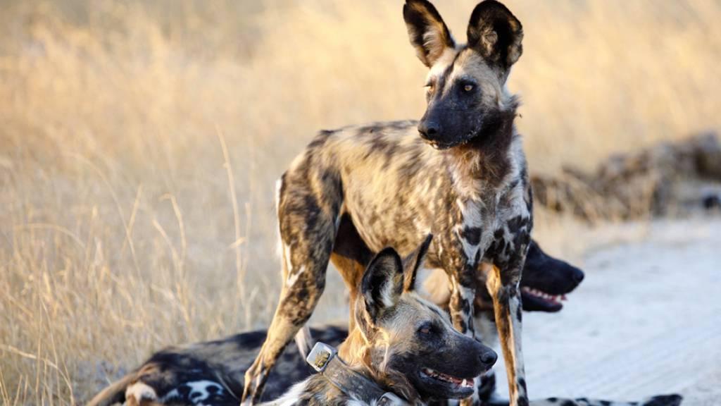 Zürcher forschen über südafrikanisches Naturschutzgebiet