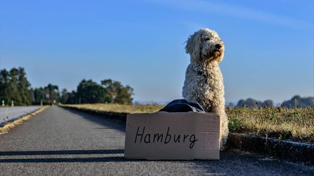 Jetzt gibts Carreisen für Hunde und ihre Halter