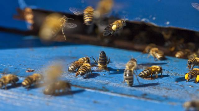 Bienen fühlten sich von Wanderern bedroht (Symbolbild)