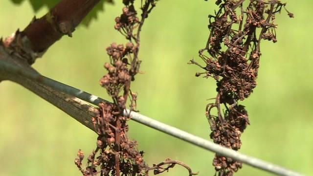 Zerstörte Ernte wegen Fungizid von Bayer?