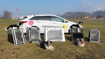 TCS Hundebox-Test