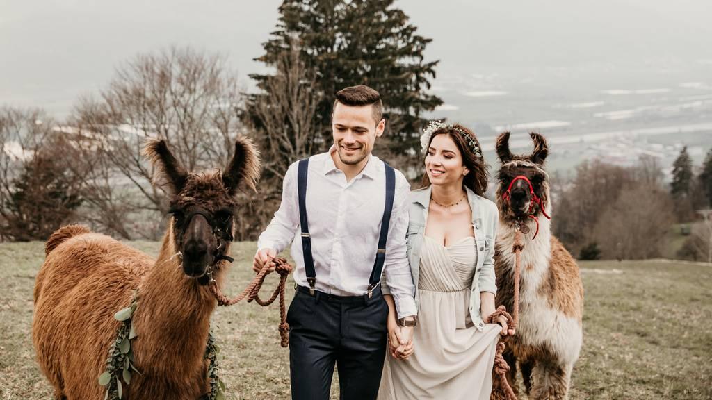 «Ja, ich will» – Ein Alpaka zur Hochzeit