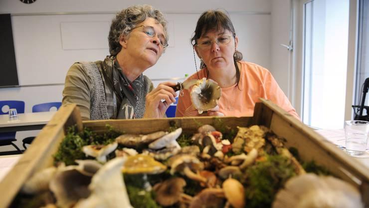 Uschi Kammer (rechts) kontrolliert mit Elisabeth Flury einen Pilz.